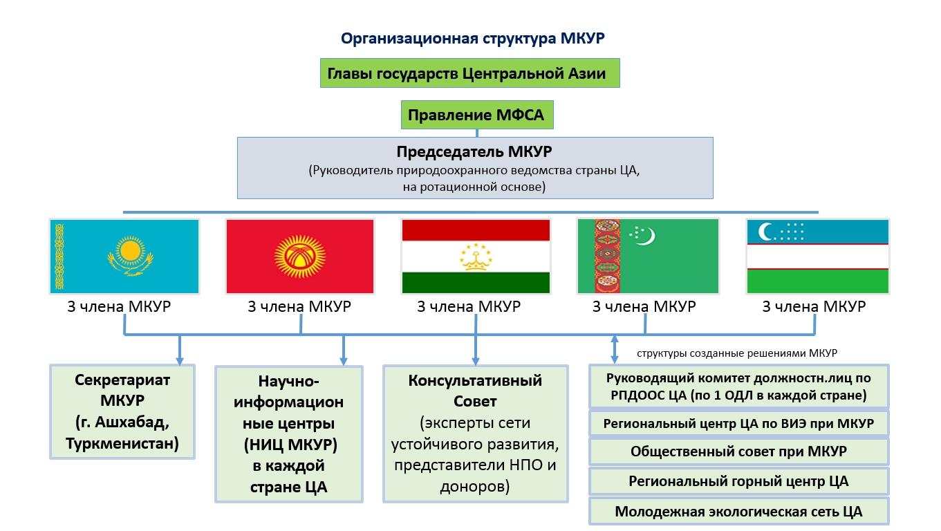 Организационная структура МКУР